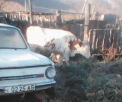 Хочется купить корову, чтобы у нас было молоко