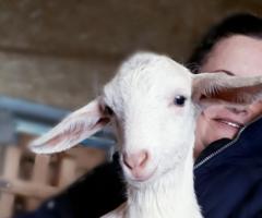 Во времянке, где они зимовали, очень тесно,  козы болели. Сейчас наших коз уже пять и козел.