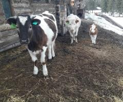 Помогите в приобретении сена для животных. Олькова Н.М., 5 детей