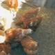 Спасибо от семьи Ионеску за покупку курочек!